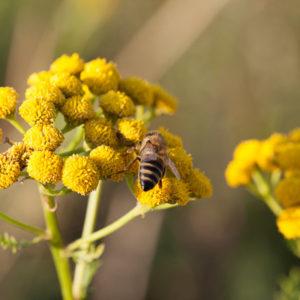 kwiatek i owad